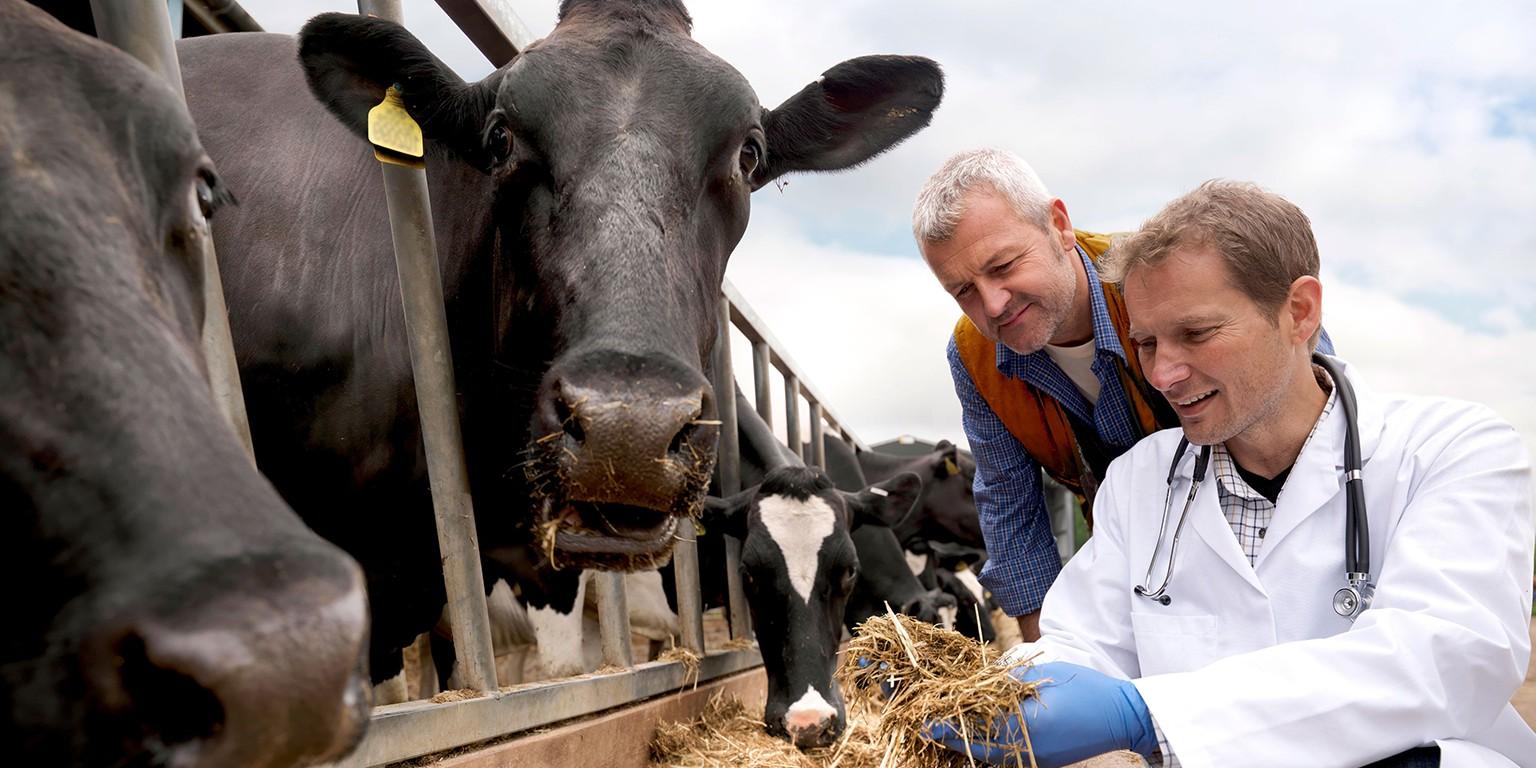 Livestock Diagnostics   LinkedIn